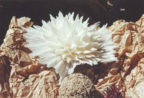 """""""Corail blanc"""" © Suzanne Dugan/coll. Autriche)."""