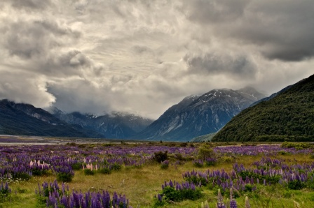 Paysage Milford Sound © Roger Fraser