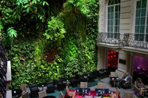 Le mur végétal de l'Hôtel Pershing Hall (détail) © DR