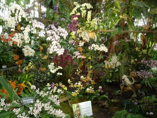 Orchidées Maison Vacherot & Lecoufle © db