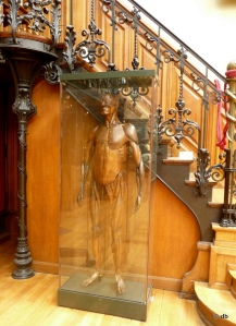 Musée d'Histoire de la Médecine, Le mannequin anatomique de Felice Fontana © db