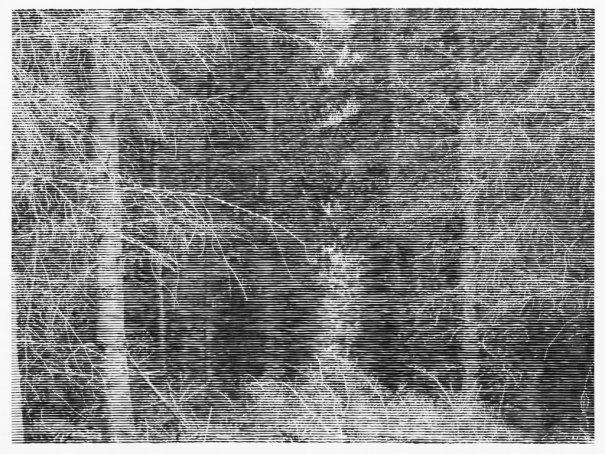 """""""Wald bei Colditz 6"""", 2014 / Courtesy Christiane Baumgartner and Alan Cristea Gallery, London Christiane Baumgartner © VG Bild‐Kunst Bonn e.V. 2015"""
