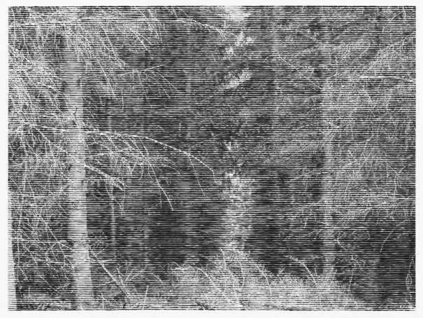 """Wald bei Colditz 6"", 2014 / Courtesy Christiane Baumgartner and Alan Cristea Gallery, London Christiane Baumgartner © VG Bild‐Kunst Bonn e.V. 2015"